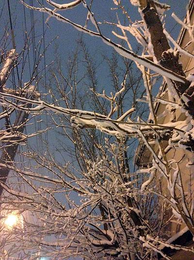 雪の花_c0059462_1123450.jpg