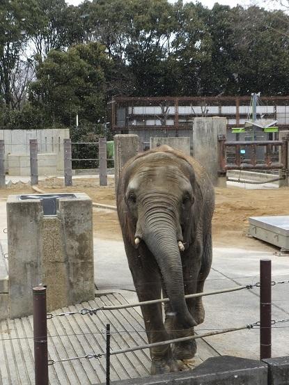 動物園のつどい_e0272869_10562218.jpg