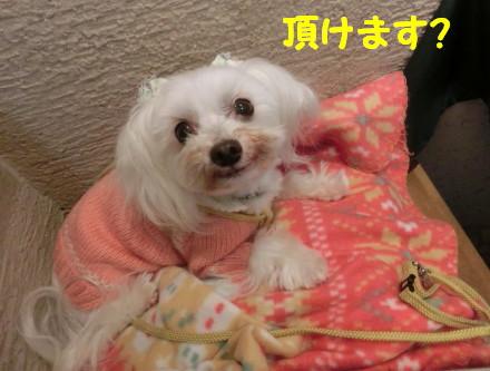 b0193480_1664597.jpg