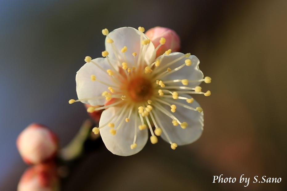春さがし_b0348205_20500975.jpg