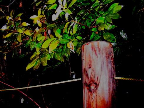 埼玉中部    ヒロバフユエダシャク交尾2015/02/08②_d0251807_19115161.jpg