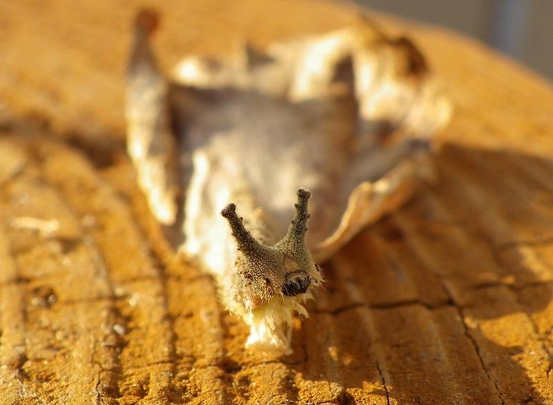 ゴマダラチョウの幼虫達_d0254540_16183792.jpg