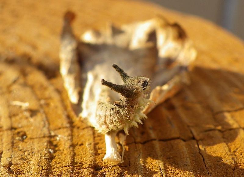 ゴマダラチョウの幼虫達_d0254540_16185226.jpg