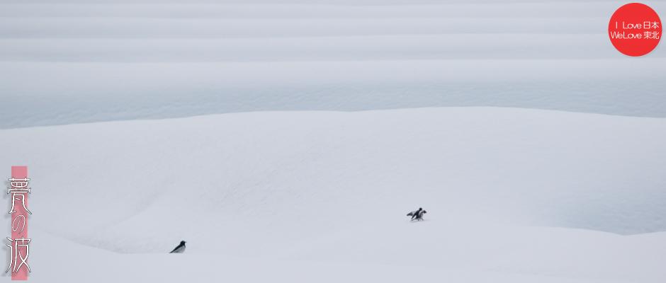 雪の晴れ間の新瀬戸地区の鳥達(セグロセキレイ・シロサギ)_b0157849_16342094.jpg