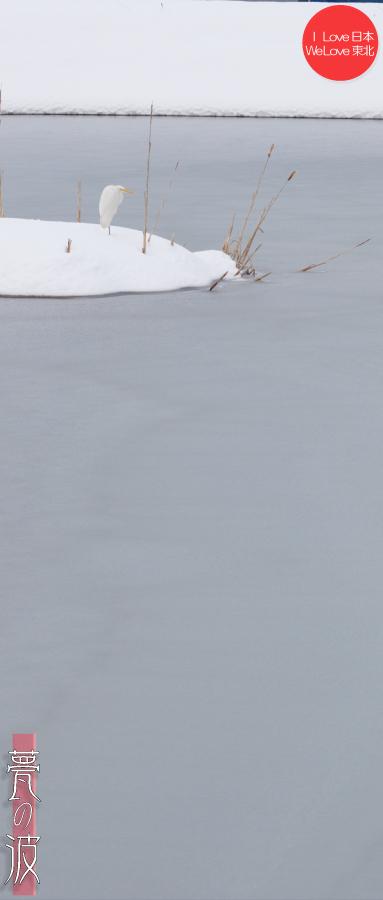 雪の晴れ間の新瀬戸地区の鳥達(セグロセキレイ・シロサギ)_b0157849_16350975.jpg