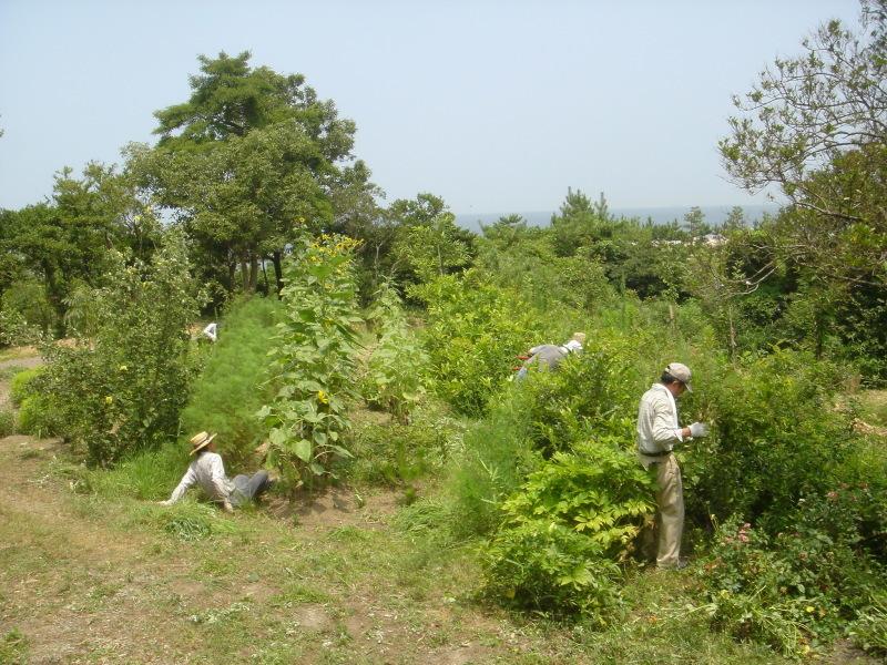 草刈りに頑張っています  in  うみべの森_c0108460_22231009.jpg