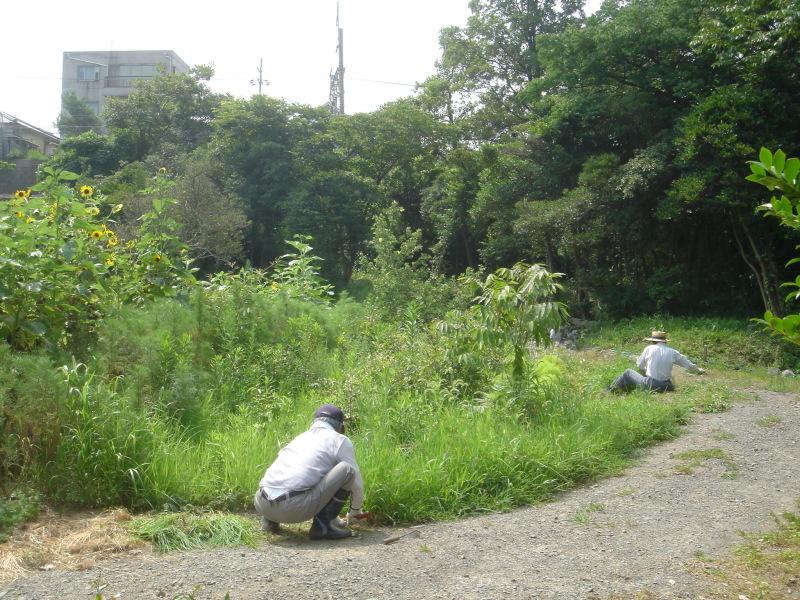草刈りに頑張っています  in  うみべの森_c0108460_22231200.jpg