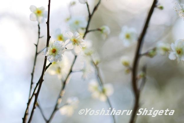 〜花灯り〜_c0152400_16134459.jpg
