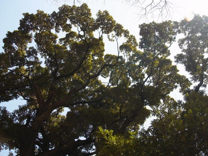常緑広葉樹と落葉樹_e0276411_21543727.jpg
