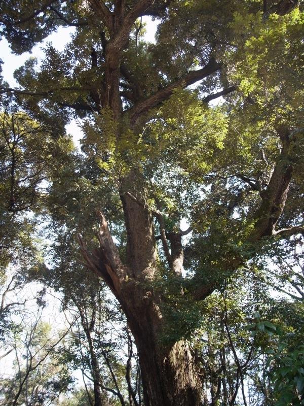 常緑広葉樹と落葉樹_e0276411_21544150.jpg