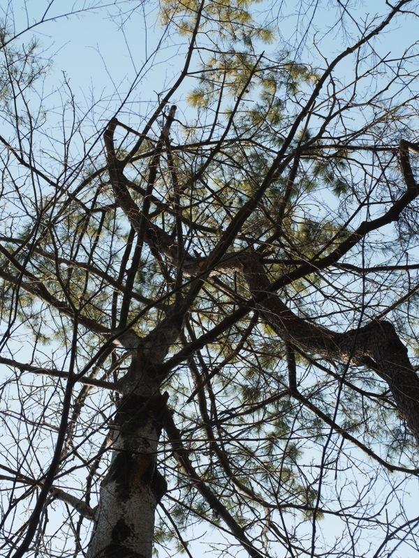 常緑広葉樹と落葉樹_e0276411_21551713.jpg