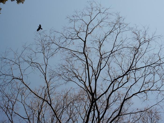 常緑広葉樹と落葉樹_e0276411_21552249.jpg
