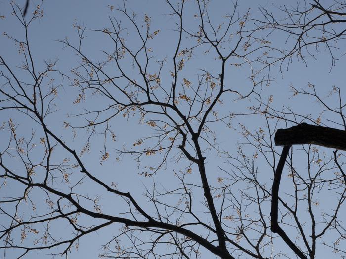 常緑広葉樹と落葉樹_e0276411_2155559.jpg