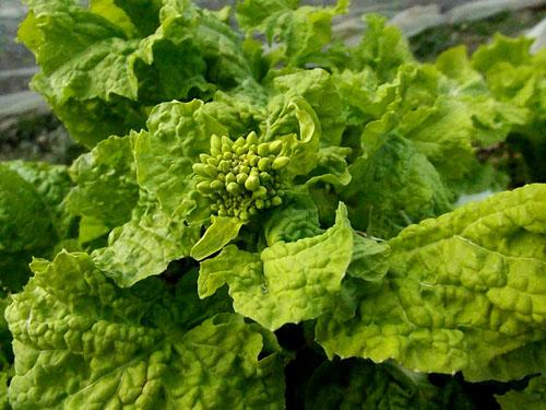 菜園に春の使者_e0048413_21243581.jpg