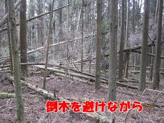 f0193521_7405035.jpg
