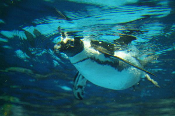 冬の動物園&水族園へ行こうキャンペーン!体験記募集!_f0357923_2382673.jpg