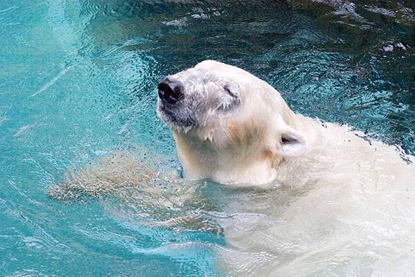 冬の動物園&水族園へ行こうキャンペーン!体験記募集!_f0357923_238419.jpg
