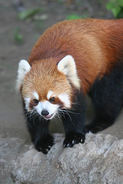 冬の動物園&水族園へ行こうキャンペーン!体験記募集!_f0357923_2441956.jpg