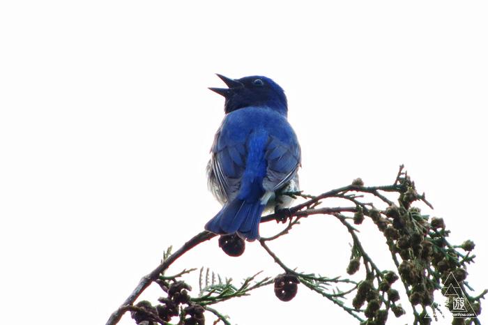 402 野呂山 ~親父と鳥撮りin広島~_c0211532_17161489.jpg