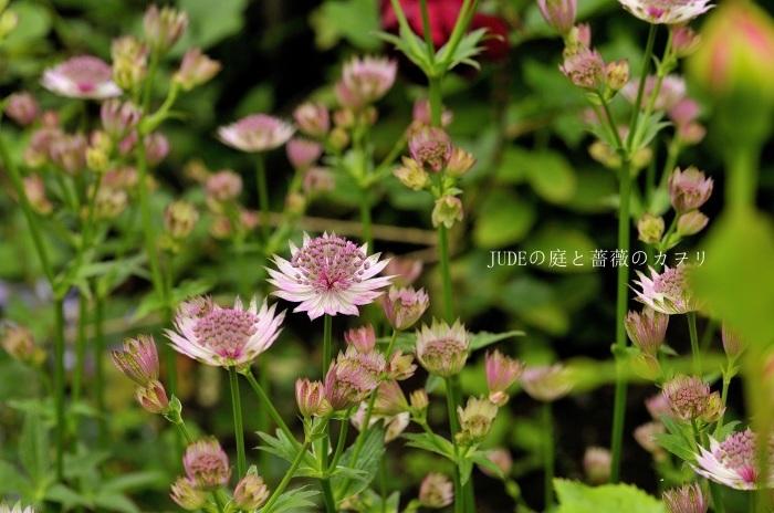 c0278671_20125267.jpg