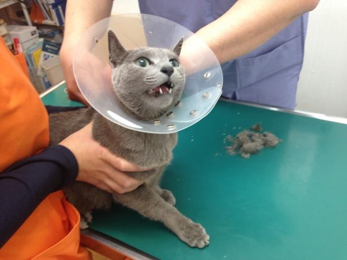王子負傷→入院 と 鼻がムズムズ_b0167282_17540563.jpg