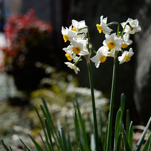 春よこい 早ーやくこい_f0099102_15381970.jpg