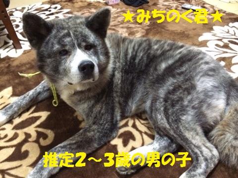 f0121712_9465477.jpg