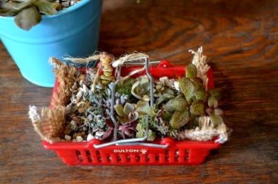 多肉植物ミニ寄せ植え仲間入り_d0263815_14301455.jpg