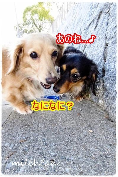 b0115642_2225493.jpg
