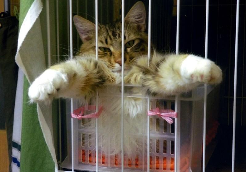 愛 猫_b0093754_17554070.jpg