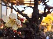 小品盆栽倶楽部 の ..._e0298782_115373.jpg
