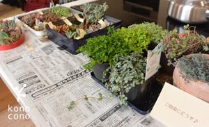 手づくり部♪ 多肉植物の寄せ植えをしましたー♪_f0321908_17424030.jpg