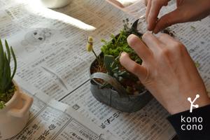 手づくり部♪ 多肉植物の寄せ植えをしましたー♪_f0321908_17432036.jpg