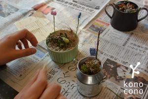 手づくり部♪ 多肉植物の寄せ植えをしましたー♪_f0321908_17432883.jpg