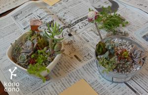 手づくり部♪ 多肉植物の寄せ植えをしましたー♪_f0321908_17433515.jpg