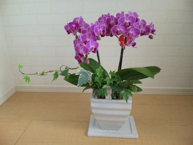 胡蝶蘭を飾りました♪_c0316026_18100163.jpg