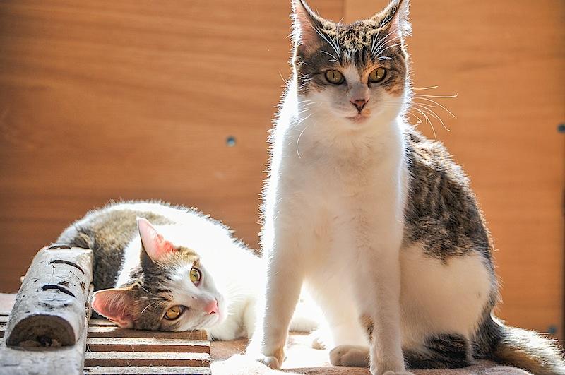 福岡 糸島 猫を飼いたい方募集(ネコの里親)_d0073743_13401229.jpg