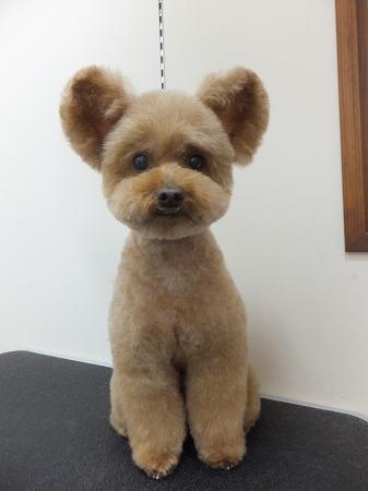 ヘアカタログ トイプードル dog signスタッフ日記