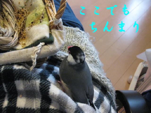 b0158061_1273172.jpg