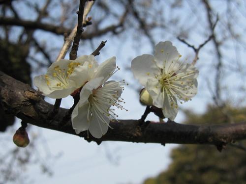 京都のつづき⑥_e0221708_18302820.png