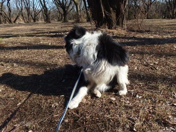 【犬】冬の日の・・・_f0141609_2310167.jpg