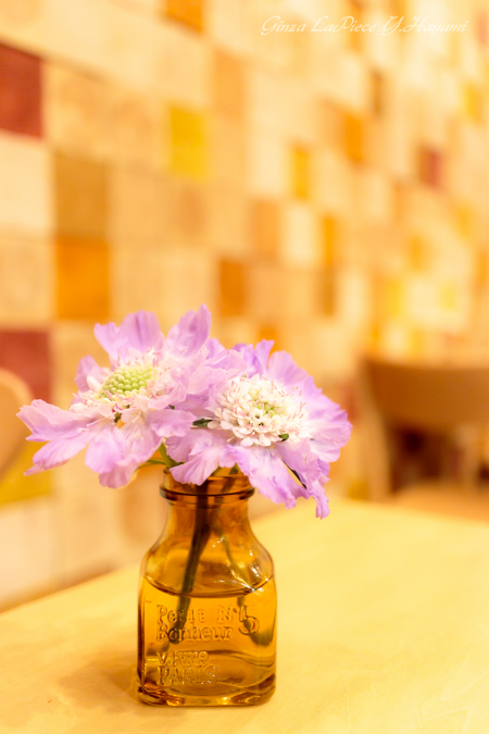 花のある風景 テーブルのスカビオサ_b0133053_062156.jpg