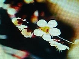 a0331562_141078.jpg
