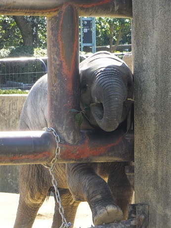動物園での年中行事 _e0272869_13300865.jpg