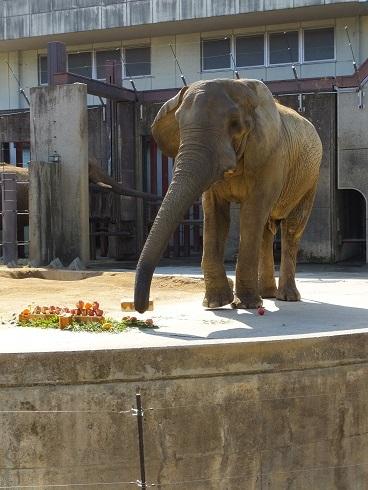 動物園での年中行事 _e0272869_14182179.jpg