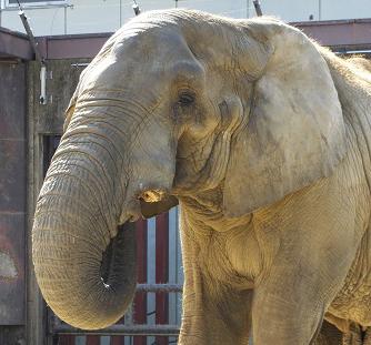動物園での年中行事 _e0272869_14210486.jpg