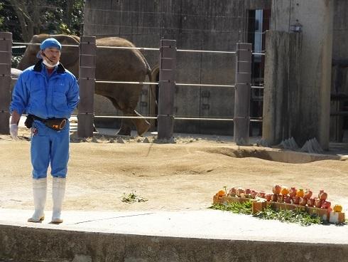 動物園での年中行事 _e0272869_14211096.jpg