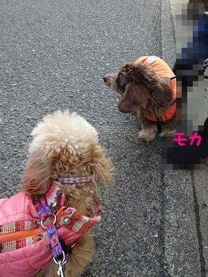 双子の様なれんちゃん_e0222588_17191880.jpg