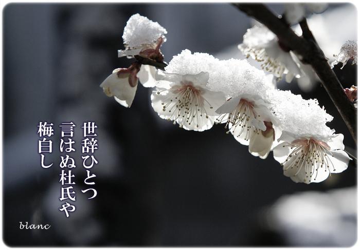 c0186592_01511.jpg