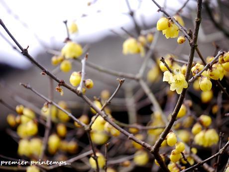 慈しみを・・・☆早春の黄色い花・・・♪_c0098807_19454499.jpg